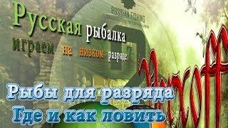 Альбинос Стерлядь Волхов  Русская рыбалка 3.7.4.