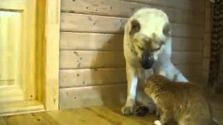 Удивительная дружба собаки и кошки