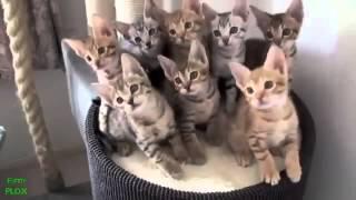 clip hài Những chú chó mèo siêu hài hước
