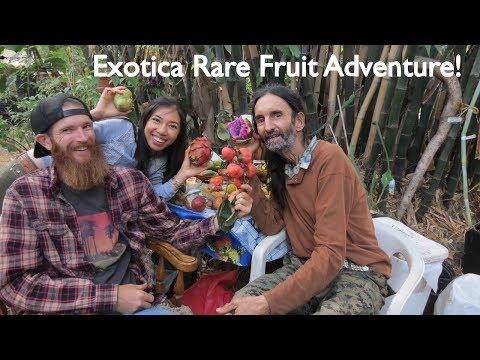 Exotica Fruit Adventure