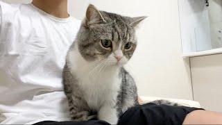 お掃除ロボに負けて膝の上に逃げてきた猫がかわいすぎた…笑