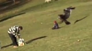 Golden eagle snatches child: Amazing video or elaborate fake? - Truthloader