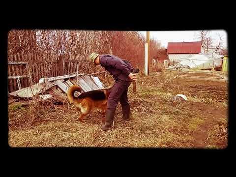 Собака преследует палку.Как нитка за иголкой))))
