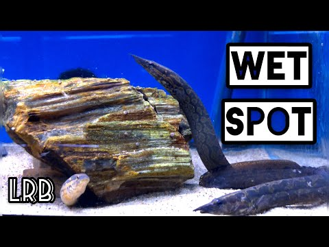 RARE Fish! Check Out these Fish in this Aquarium Fish Store Tour