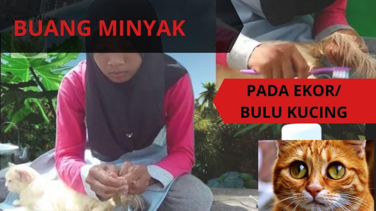 Mandikan Kucing Saya Yang Bulu Berminyak Degreaser Treatment Basic Grooming Youtube