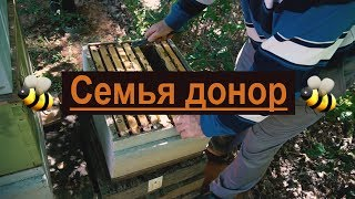 Пасека #31 Семья дающая золотые яйца - Моя пасека - Семья донор. Пчеловодство.