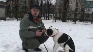 Первый урок кличка(Приучение собаки к кличе. Первые шаги в дрессировке. Новые уроки по обучению щенка смотрите на моем канале..., 2010-02-01T23:31:33.000Z)