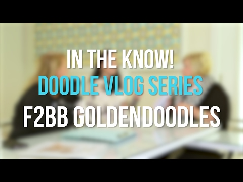 In The Know - F2BB Goldendoodles