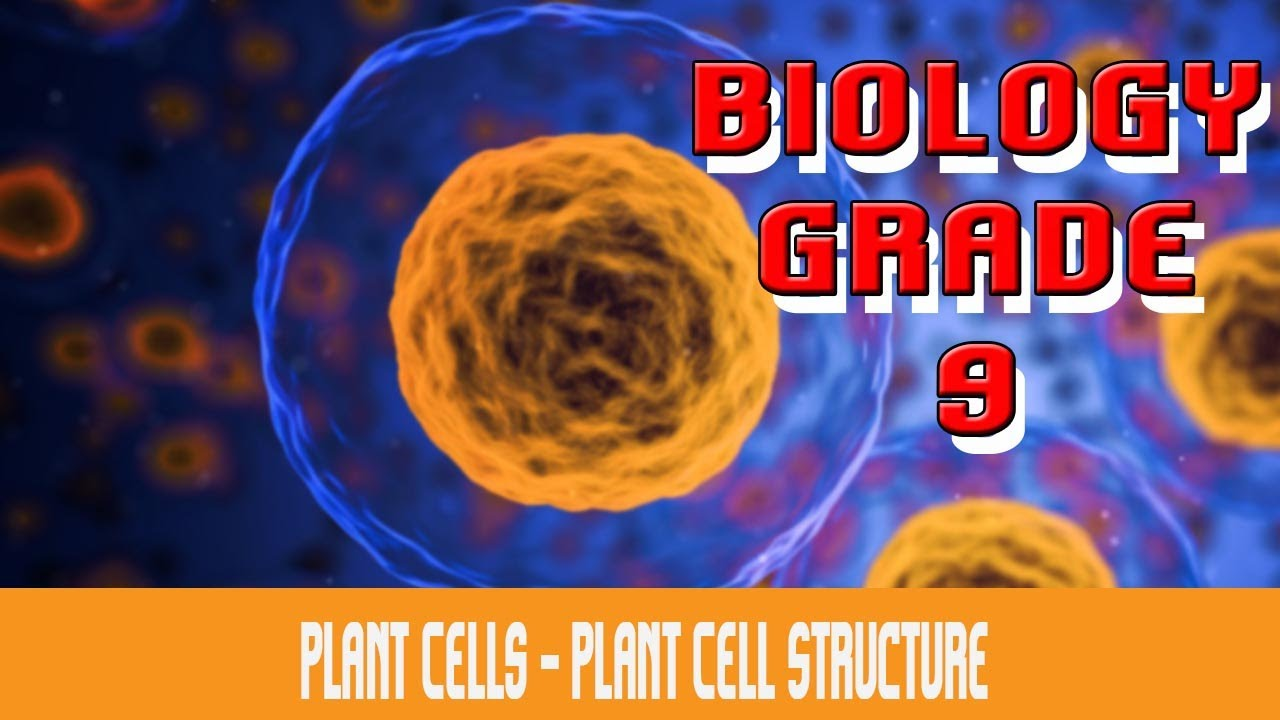 The Cell | Plant Cell : The Anatomy : Definition, Functions ...