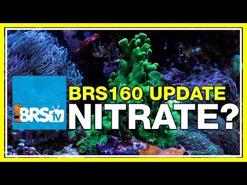 ULM Tank Trials Ep-20: BRS160 Update - Time to dose Nitrate? | BRStv