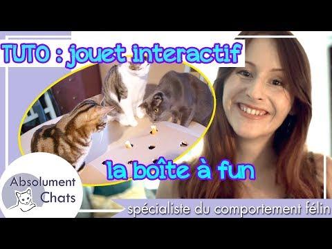 Comment fabriquer un jouet interactif pour son chat ?