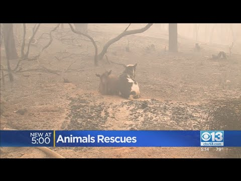 'This Breaks Your Heart': Animals Rescued After Fire Blows Through Berry Creek