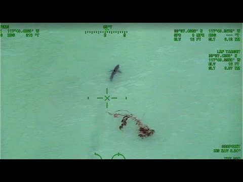 Paddle-boarders warned they're swimming with 15 great white sharks