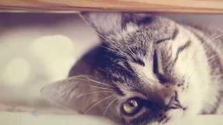 Добрые, прикольные и смешные фотографии животных котов