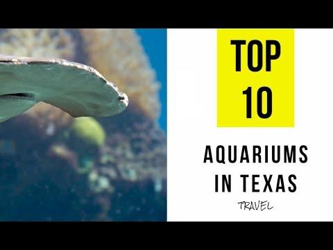 TOP 10. Best Aquariums in Texas