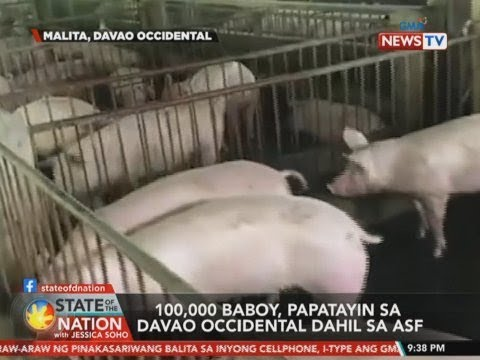 SONA: 100,000 baboy, papatayin sa Davao Occidental dahil sa ASF