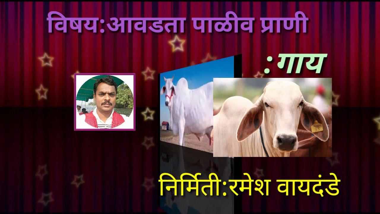 Essay: Funny essay on cow in marathi