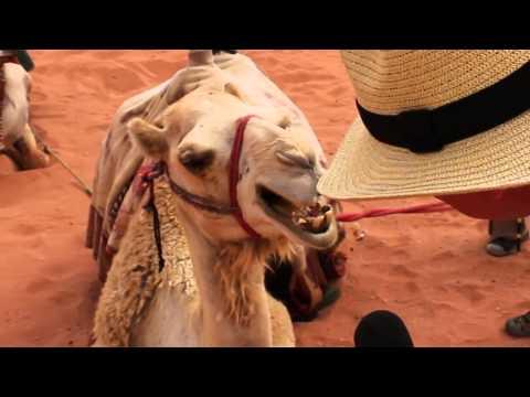 Jazz FM Visit Jordan - Interview with a camel