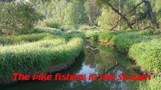 Ловля щуки в ручье/The pike fishing in the stream..