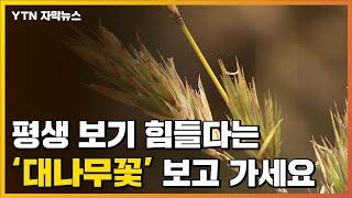[자막뉴스] 평생 보기 힘들다는