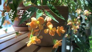 5️⃣월 홈 가드닝을 빛나게 만들어주는 예쁜 식물 소개
