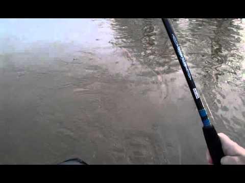 Blue cat Wabash river