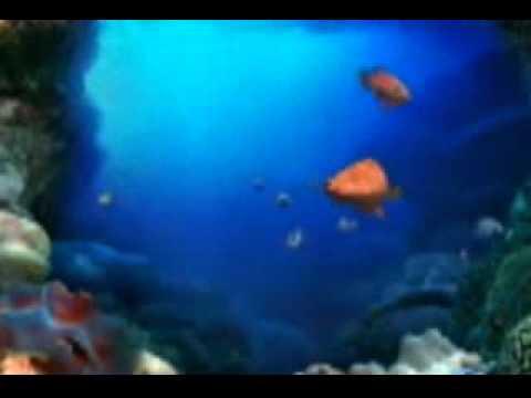 ikan kekek instrumental