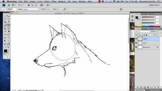 How to Draw a Wolf in Photoshop : Photoshop Tutorials