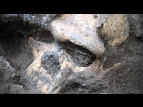 GEORGIA SKULL DISCOVERY IN 60 SEC - BBC NEWS