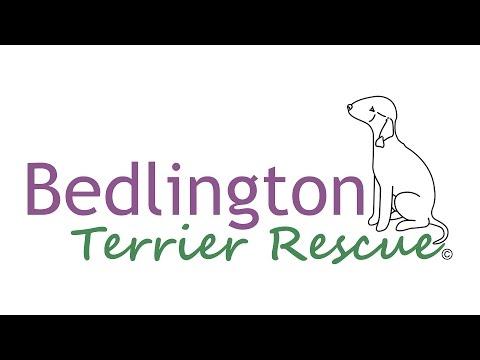 Bedlington Terrier Rescue - About Us