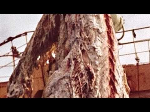 PLESIOSAUR FOUND Gigantic dinosaur carcass caught fishing boat