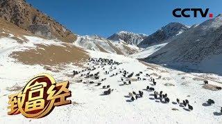 《致富经》 20200117 巍峨的大山 奔跑的财富| CCTV农业