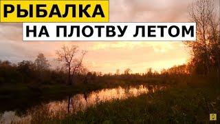 Ловля Плотвы (Чебака) Летом на Удочку (Донка). На Что Ловить Плотву (Червь, Перловка)?