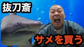サメを買いました!!(I bought a shark)