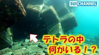 【 テトラ水中探訪#1 )潜ってテトラポッドの中へ潜入!巨大メジナにクロダイ祭り!?
