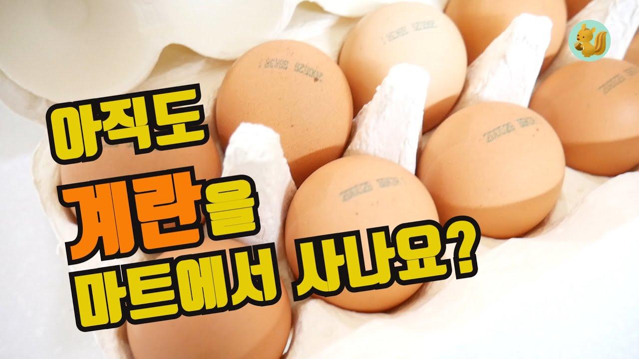 최상급 계란을 마트 대비 50% 더 싸게 사는 방법, 계란은 좋은 것 드셔야 해요!