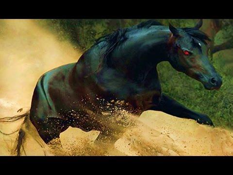 شاهد اغرب خمس خيول في العالم