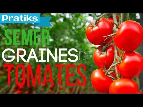 Comment semer ses graines de tomates youtube - Comment semer des tomates ...