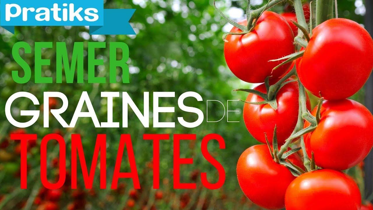 comment planter graines tomates