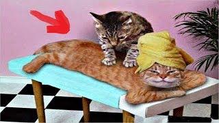 Кот делает массаж хозяину