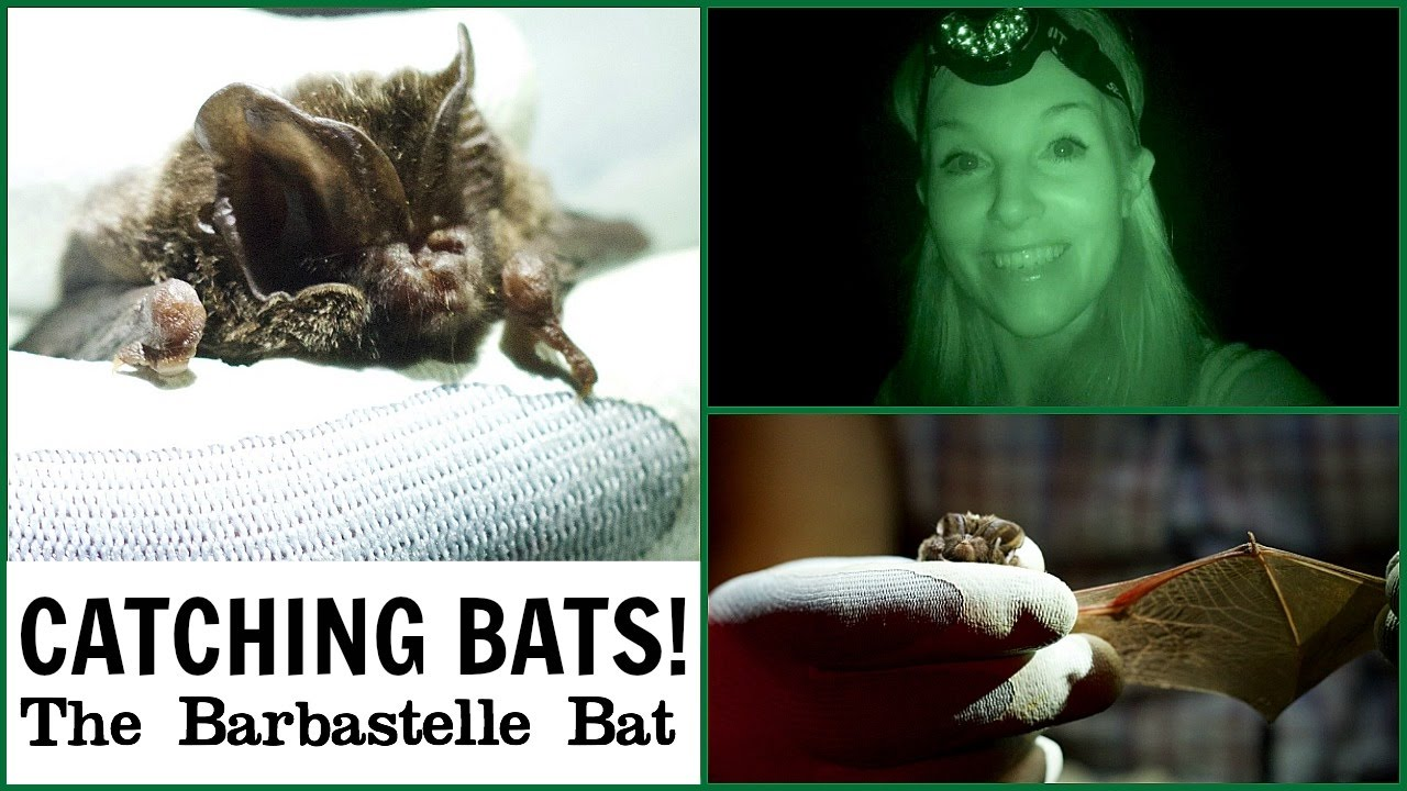 Searching for Bats (using a Night Vision 'Special Camera!') | Maddie Moate
