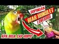 Cara Lovebird Biar Konslet Ngekek Ngetik Dopingan Murah  Mp3 - Mp4 Download