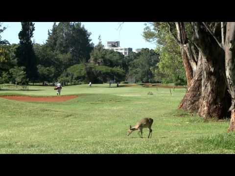 Zimbabwe Open - the course