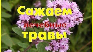 ๑●•  Сажаем лекарственные травы Травы для здоровья!๑●•