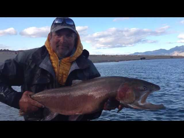 21.5# Lahontan Cutthroat Trout from Pyramid Lake