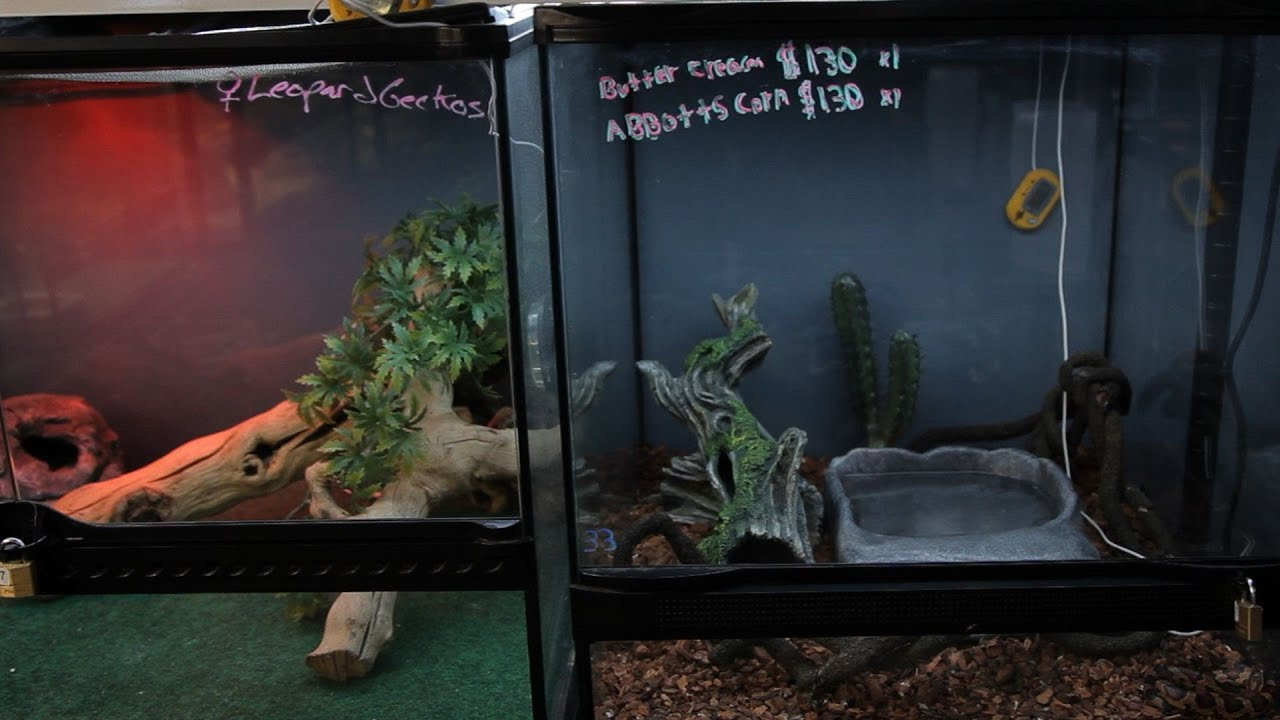 How To Set Up A Snake Aquarium Pet Snakes Youtube