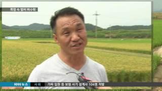 [KNN 뉴스] 폭염속 벼수확 힘들어도 기쁜 농심