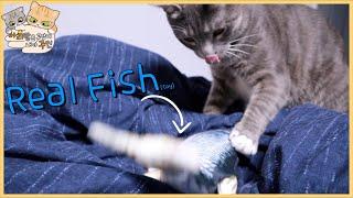 고양이에게 생선을 줘봤습니다.