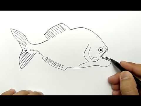 700+ Gambar Binatang Ikan Piranha Terbaik