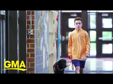 How dogs are helping save kids with life-threatening allergies l GMA